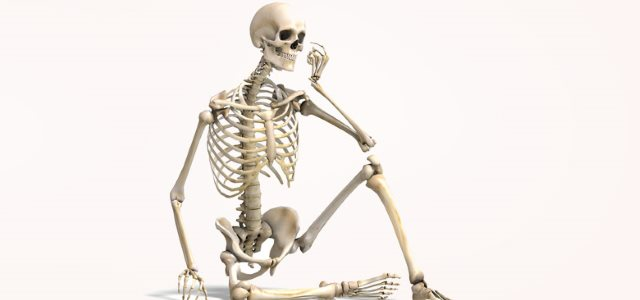 how many bones are there in the human body? - info curiosity, Human body