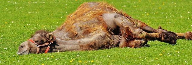 camel-rest