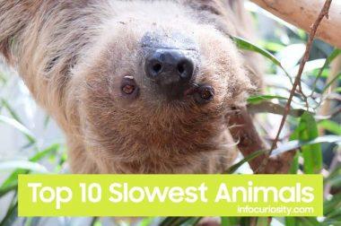 Top 10 Slowest Animals